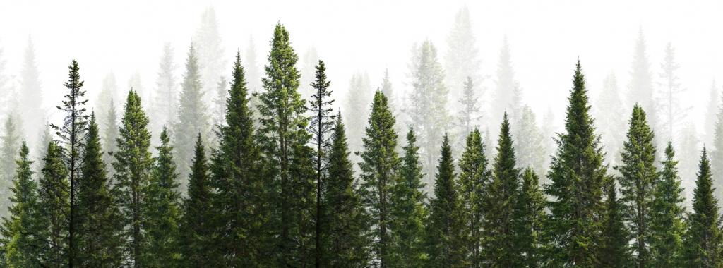backgroundtrees